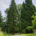 Das Arboretum in Annarode ©SMG