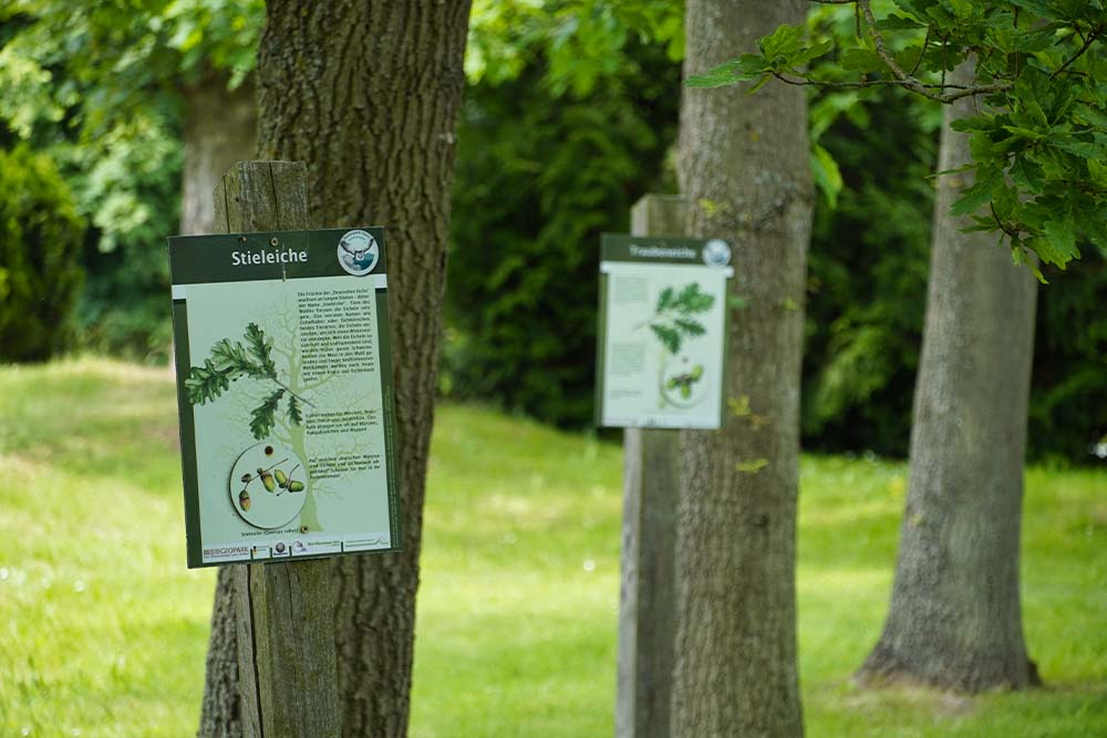 Baumkunde im Arboretum in Annarode ©SMG