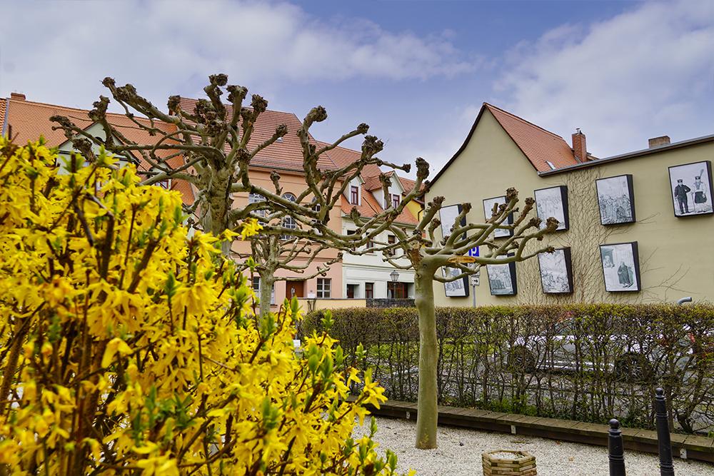 Ohrenweide im Frühling, Lutherstadt Eisleben