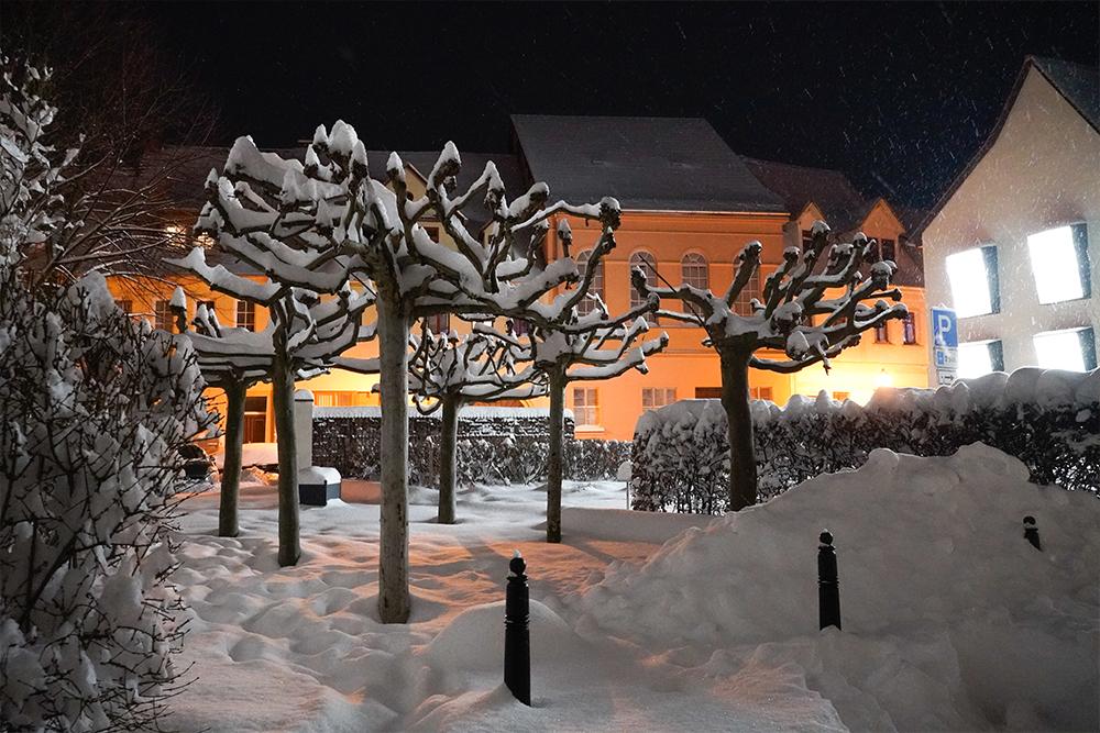 Ohrenweide im Winter, Lutherstadt Eisleben