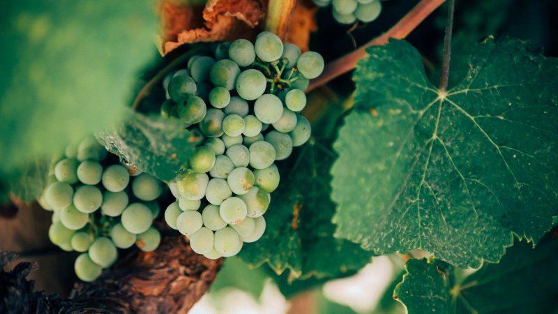 Wein & Winzer - Mansfelder Land